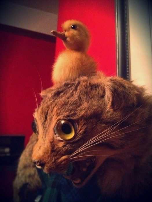 Scary Taxidermied Animals