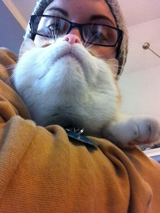 Cat Beards