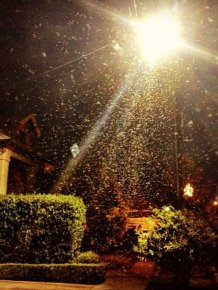 Termite Swarm in New Orleans