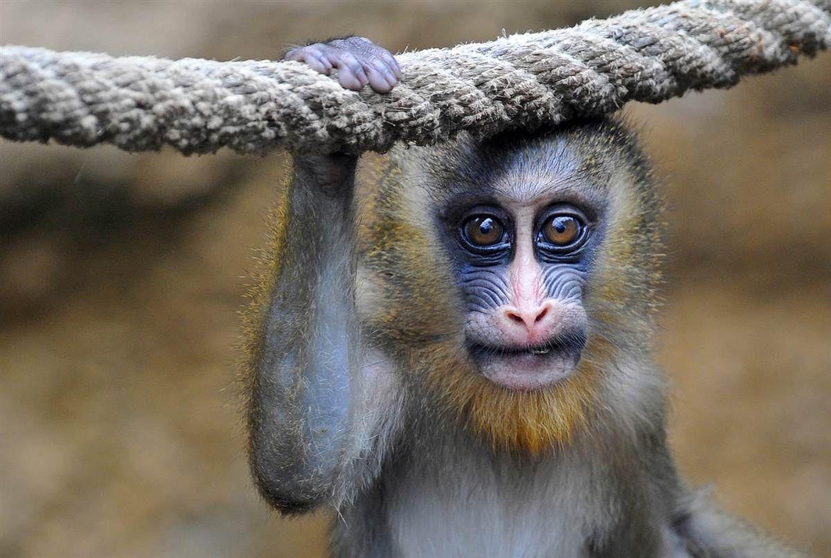 Animal Planet Part 372 Animals