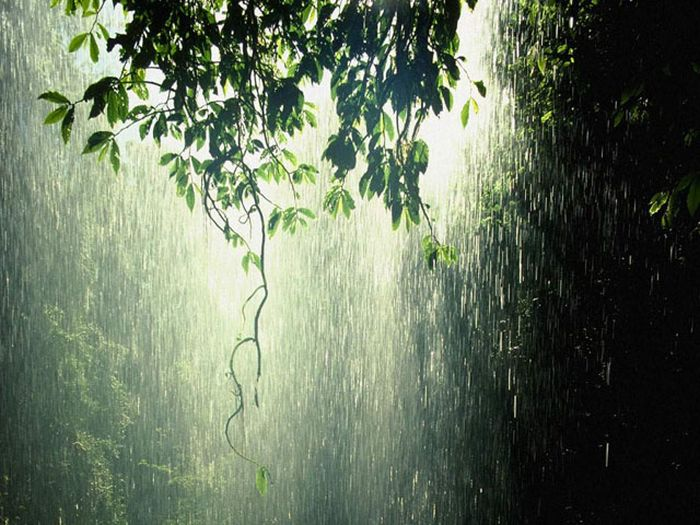 Beautiful Photos of Rain