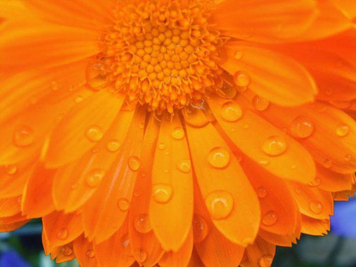 Beautiful Photos of Rain
