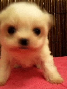 Selection of Cute GIFs