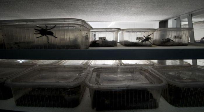 Spider Farm in Chile