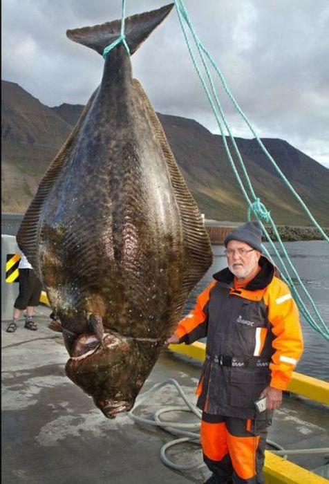 Big Catches