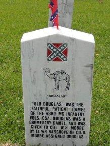 Douglas the Camel
