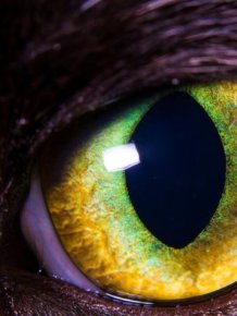 Mesmerizing Eyes Photography