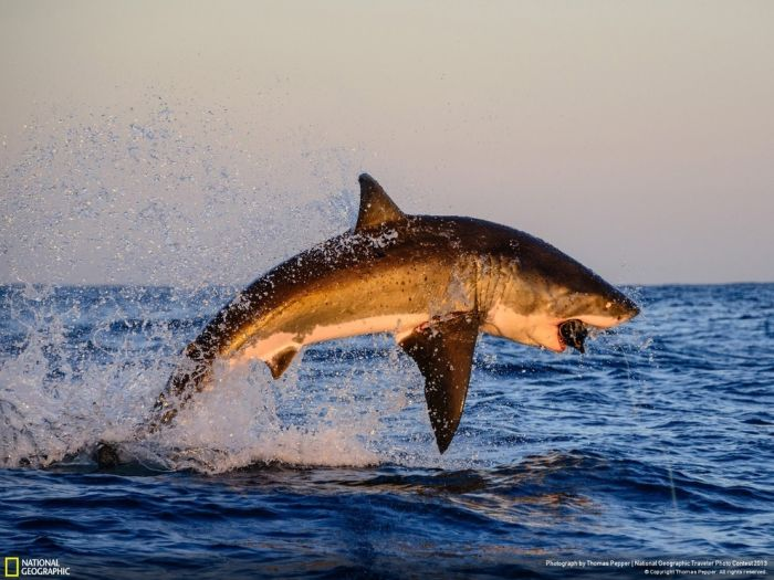 Beautiful Wildlife Photos From The National Geographic