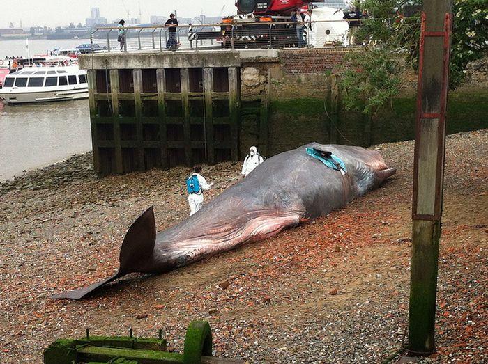 Beached Whale Art