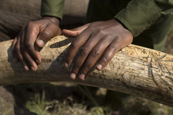 Kenya Wildlife Service Relocates Elephants