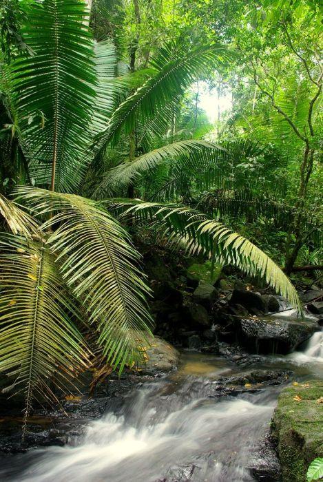 Amazon Forest Photo Tour