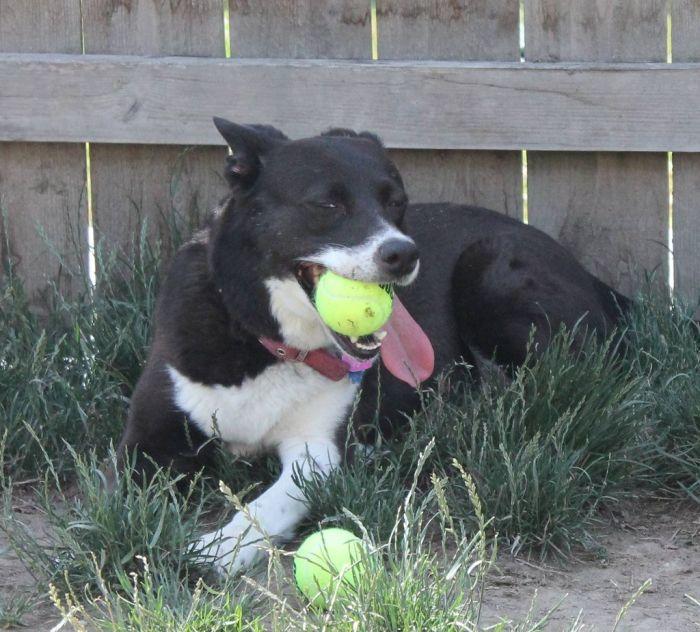 3 Dogs vs 60 Balls