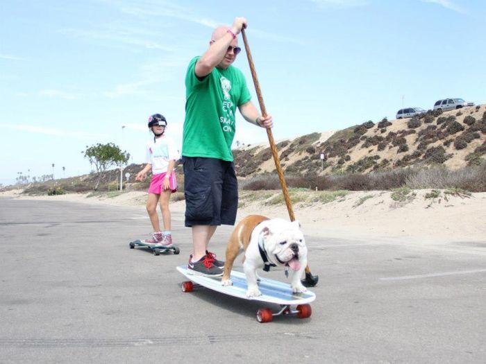 Beefy the Skateboarding Bulldog