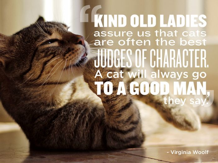 Pet Quotes | Great Quotes About Pets Others