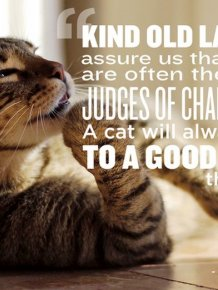 Great Quotes About Pets