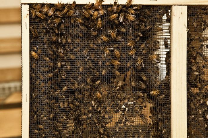 3D Printer Made Out of Bees