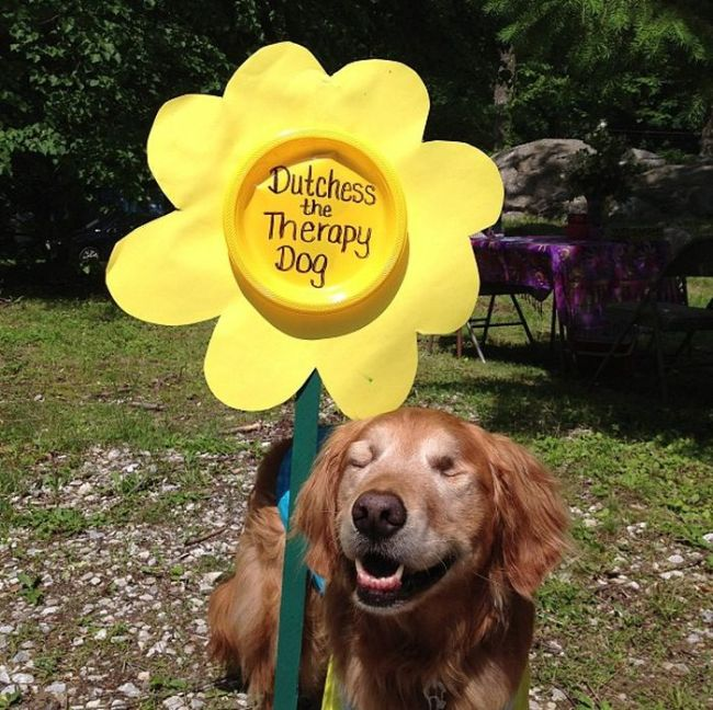 Dutchess The Blind Therapy Dog