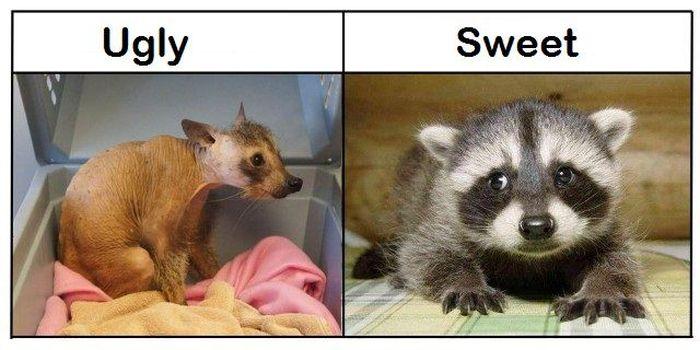 Ugly vs Sweet