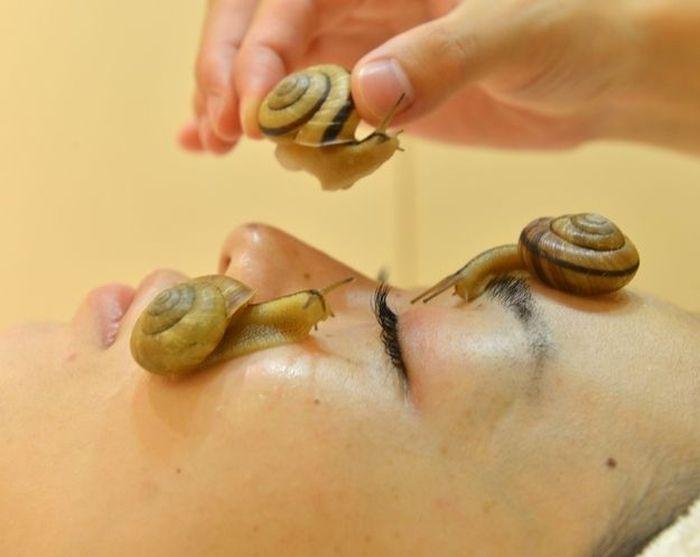 Snail Spa