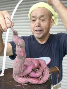 Mutants of Fukushima