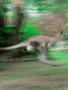 Funny Animal GIFs