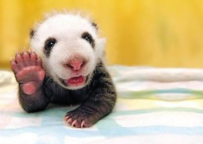 Animals Say Hi
