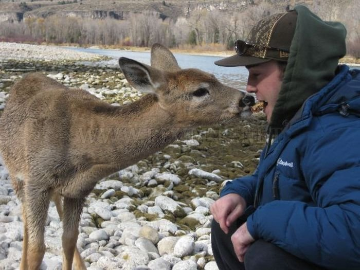 Friendly Little Deer