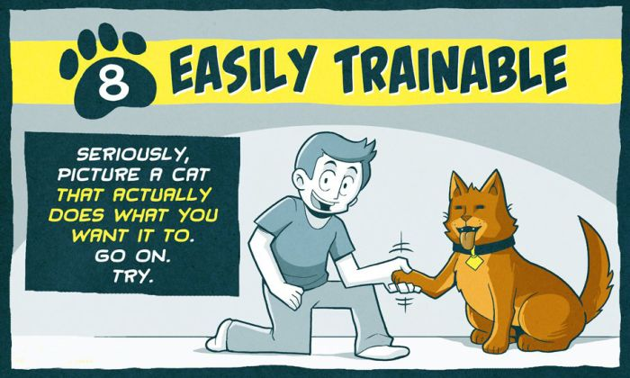 How to Make Cats Better