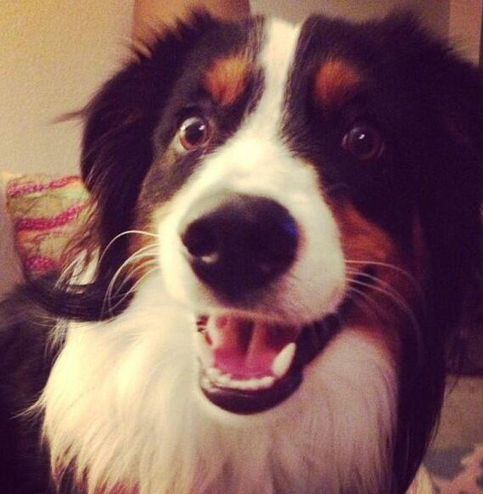 Smiling Pets