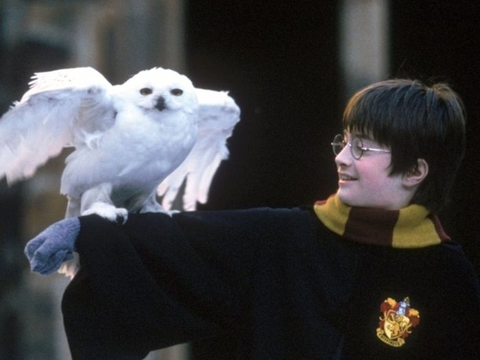 Interesting Facts about Harry Potter Movies