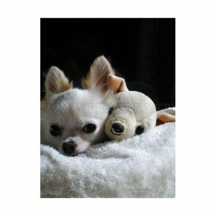 Animals with Stuffed Animals