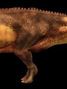 72 Million-Year-Old Dinosaur Remains