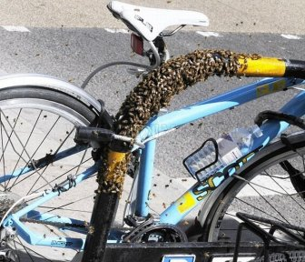 Extreme Way to Protect Your Bike from the thieves