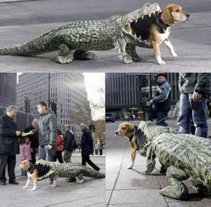 Awesome Pet Owners