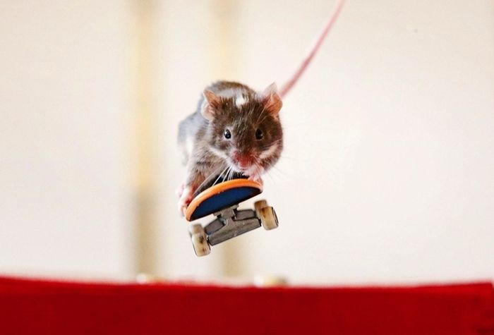 Skateboarding Mice