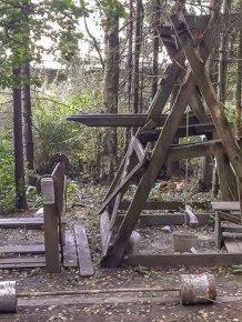 Forest Gym