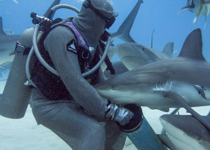 Shark Whisperer Hypnotises Shark