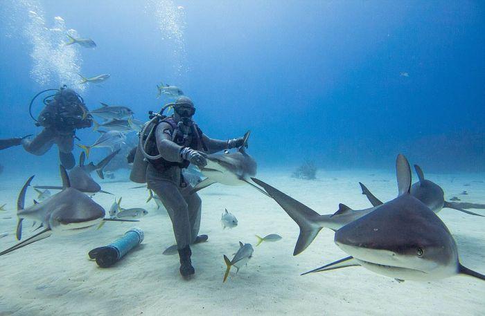 Shark Whisperer Hypnotises Shark