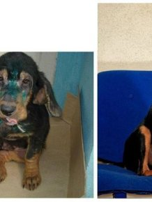 Abandoned Dogs Before and After