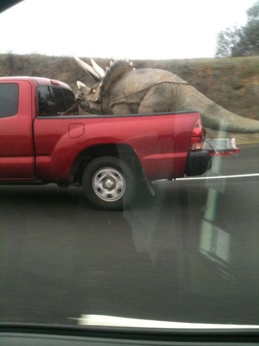 Odd Things on the Road
