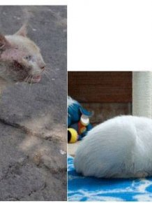 Abandoned Cats Before and After