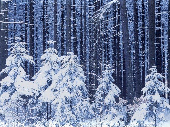 Beautifull Nature