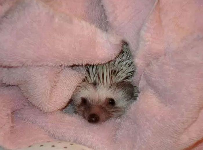 Hedgehog Takes Bath