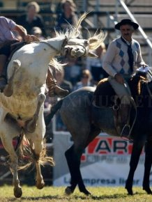 Gaucho, the Argentinian Cowboys