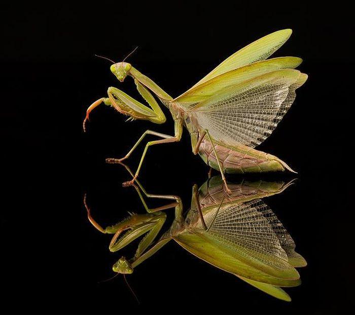 Amazing Macro Photography