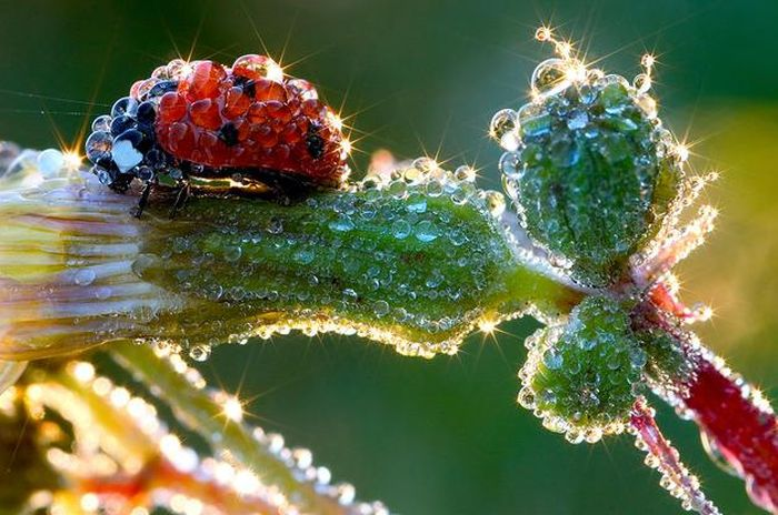 Amazing Macro Photography