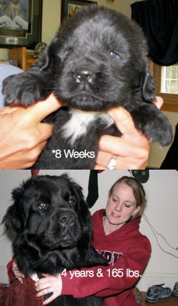 Pets Then and Now