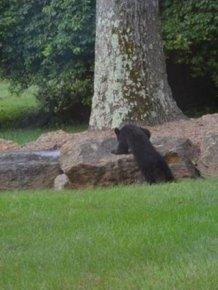 Bear Cubs Play on a Slide