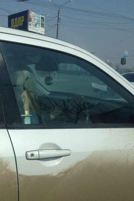 Funny and Odd Things Spotted on the Road