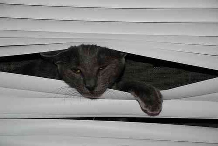 Cats Vs. Blinds